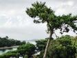 image of f4iaz