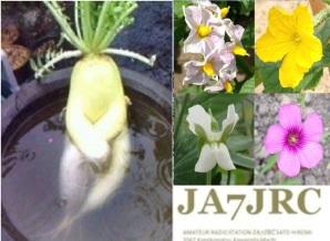 image of ja7jrc