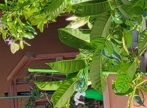 image of sv2oyo